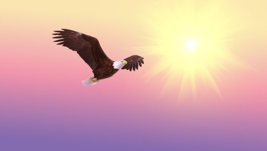 wings a poem by vanya kaushik